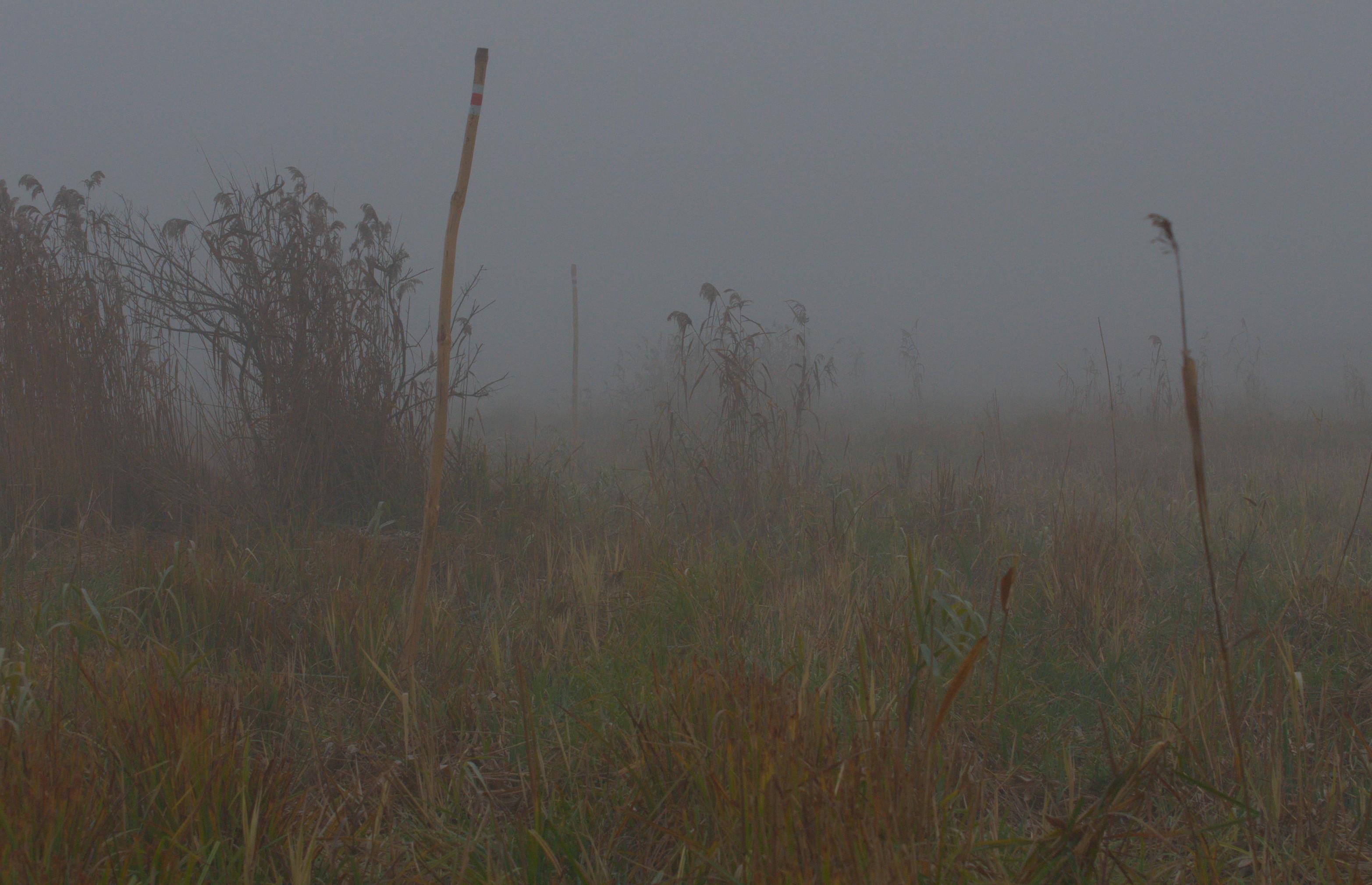 Mgły i inne zjawiska